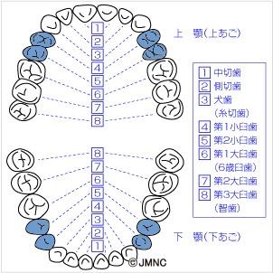 dental_chart